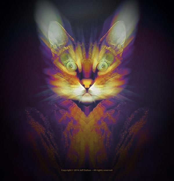 The Dawn of Felinity